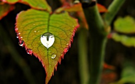 Preview wallpaper Green leaf, water drop, blur