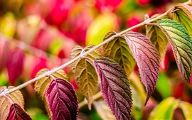 Preview wallpaper Purple leaves macro, nature plants