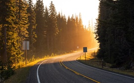Preview wallpaper Road, sun rays, light, forest, trees, spruce
