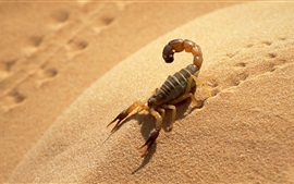 Preview wallpaper Scorpion in the desert