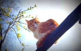 春、オレンジ色の猫、朝の太陽