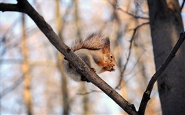 Preview wallpaper Squirrel, nuts, branches, trees