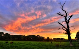 Preview wallpaper Sunset, green grass, trees, animals, red sky