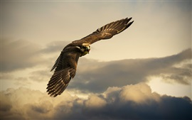 Preview wallpaper Switzerland, bird flight in sky, eagle, clouds