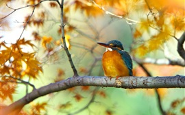 Preview wallpaper Tree branch, yellow leaves, autumn, bird, kingfisher