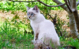 Дерево, ветви, трава, белый кот