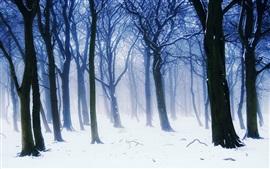 Cenário de floresta do inverno, nevoeiro, árvores, ramos, neve branca