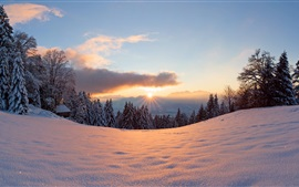 Preview wallpaper Winter, snow, sun, light, forest, trees, sunset