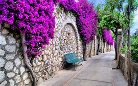 Beautiful city, Italy, streets, trees, flowers, benches
