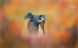 Preview wallpaper Bird close-up, chickadee flying, blur background