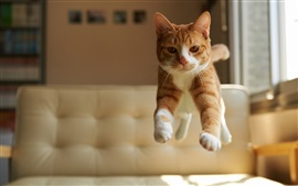 Preview wallpaper Cat jump, house