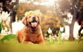 Preview wallpaper Cute brown dog, wreath, flowers, tulips, summer, nature