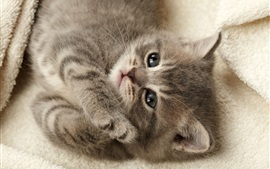 Preview wallpaper Cute gray kitten, sleep, face, eyes