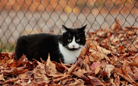 Preview wallpaper Fence, leaves, autumn, black and white cat