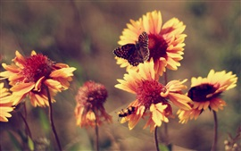 Preview wallpaper Flowers, butterfly, hot summer, marigolds