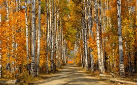 Forest, trees, birch leaves, autumn, road