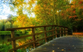HDR scenery, park, leaves, trees, forest, autumn, wood bridge