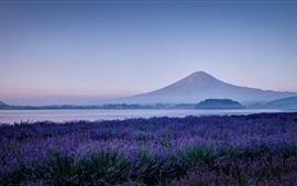 Japão, Fuji montanha, flores de lavanda, natureza, manhã