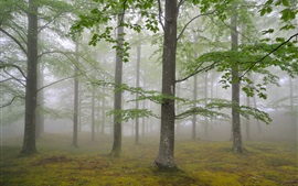 Preview wallpaper Nature forest trees, fog, foliage