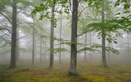 自然林の木、霧、葉