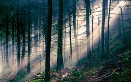 Nature landscape, forest, light, sun rays, trees