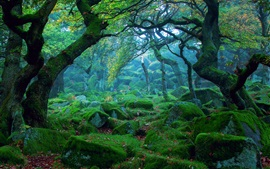 Nature landscape, forest, mist, rocks, moss, green