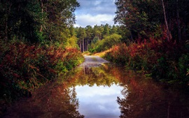 Preview wallpaper Nature scenery, autumn, road, forest, trees, water, puddle