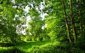 Preview wallpaper Park, summer, London, trees, forest, green