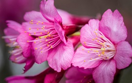 Preview wallpaper Pink flowers close-up, petals