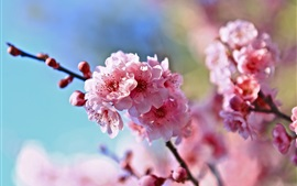 Preview wallpaper Spring, twigs, pink cherry flowers, blur background
