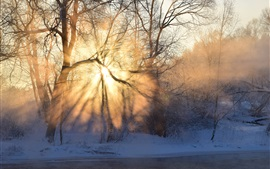 Winter, morning, sunrise, sun rays, fog, trees, snow