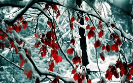 Preview wallpaper Winter, snow, trees, branches, red leaves