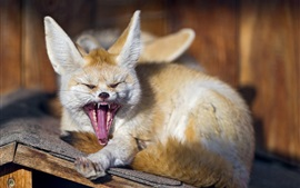 Preview wallpaper Animals close-up, fox, yawns
