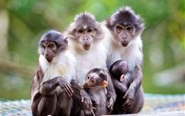 Animales de la familia, el mono, la madre, el bebé