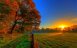 Autumn sunset nature, trees, road, meadow, fields