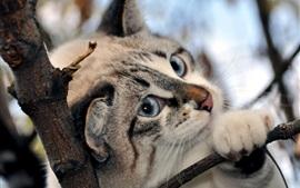 Os olhos azuis do gato, nariz rosa, ramo, neve