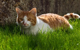 Preview wallpaper Cute cat, grass, white brown