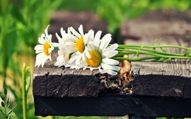 Preview wallpaper Daisies flowers, white petals