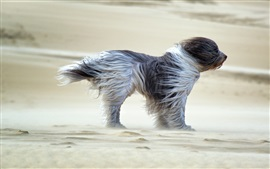 Preview wallpaper Dog in the wind, sands