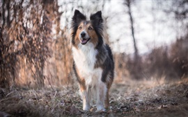 Dog, nature, bokeh