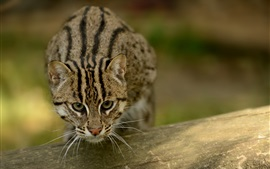 Preview wallpaper Fishing cat