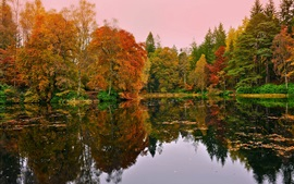Forest, trees, lake, autumn