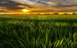 Green, sun, fields, green, sky, clouds, dusk