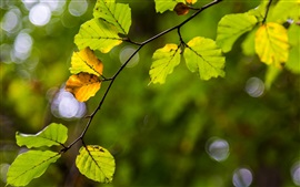 Preview wallpaper Green yellow leaves, branch, blur