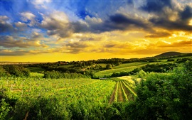 Preview wallpaper Kahlenberg hills, Austria, nature, vineyards, dusk