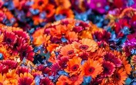 Muchas flores de color naranja