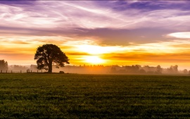 Preview wallpaper Morning, dawn, fog, sunrise, sky, clouds, fields, meadow, trees