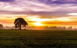 Mañana, amanecer, niebla, salida del sol, cielo, nubes, campos, prados, árboles