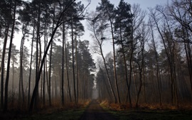 Preview wallpaper Morning forest, road, trees, fog