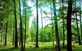 Preview wallpaper Nature landscape, forest, trees, summer, green, glare